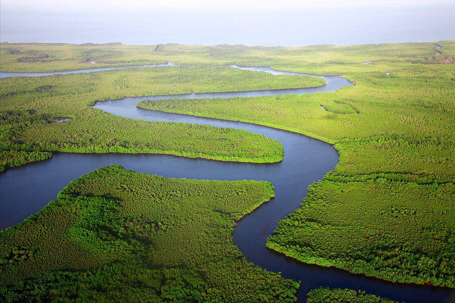 Gambian river winding through lush forest