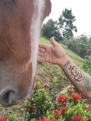 ALL animals respond positivity to Reiki
