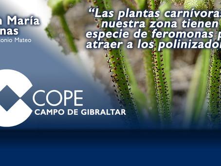 """Juan María Arenas: """"Las plantas carnívoras de nuestra zona tienen una especie de feromonas"""""""
