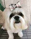 grooming 4.jpg