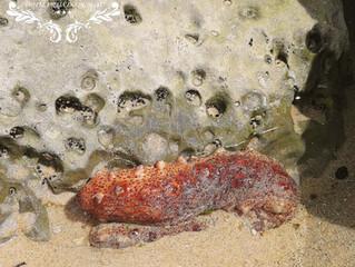 Biodiversity around us- Invertebrates