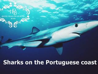 Hoje a partir das 19h os Tubarões da nossa costa estão em destaque