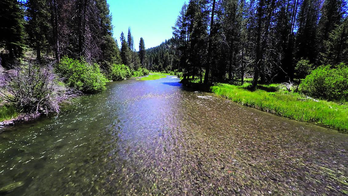 Truckee Creek1