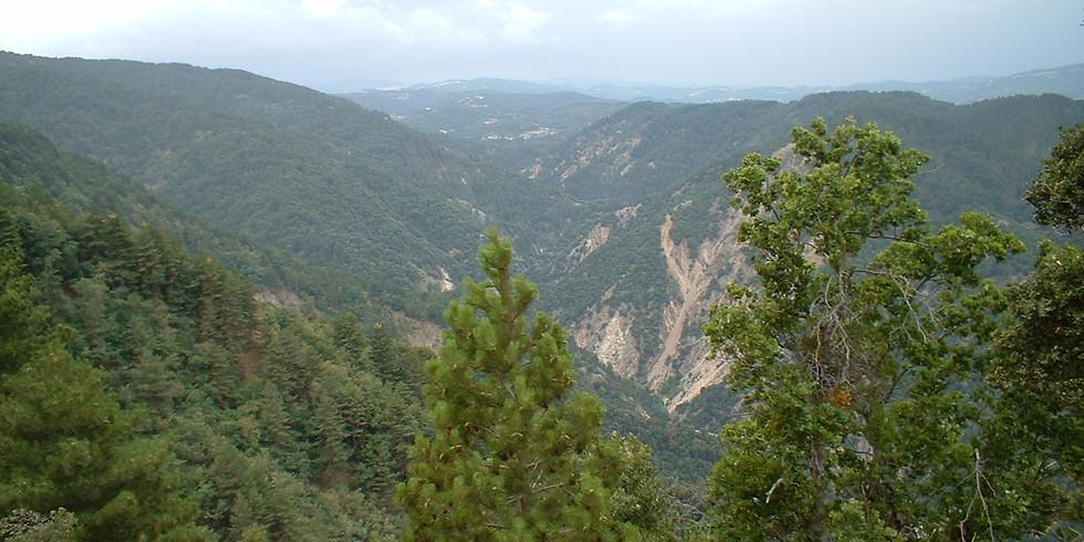 Nei boschi della Sila Greca