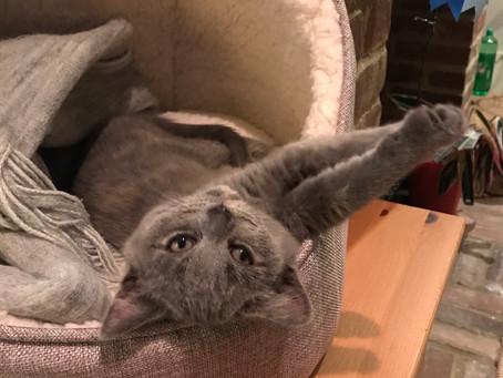 New Year, new book, new kitten!