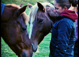 Pony book author Kate Lattey on the horses in her life and how they have inspired her