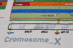 cromosoma-x.jpg