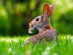 Pranzo di Pasqua - sostenibilità ambientale, economica e sociale
