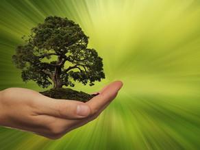 Transizione ecologica: i terricci per il vivaismo