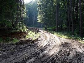 trójmiejski park krajobrazowy, lasy oliwskie