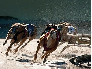 Geperste brok speciaal voor Sport honden