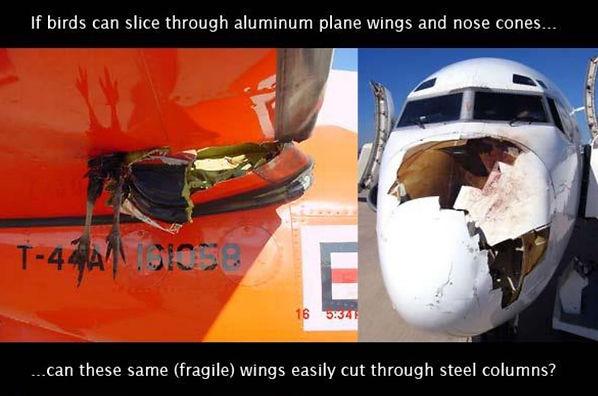 Birds trash plane2.JPG