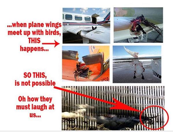 Birds trash plane.JPG