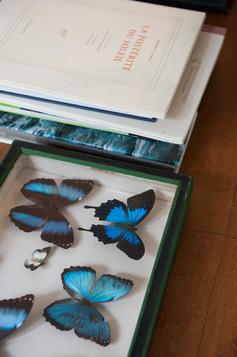 Déco salon avec une collection de papillon