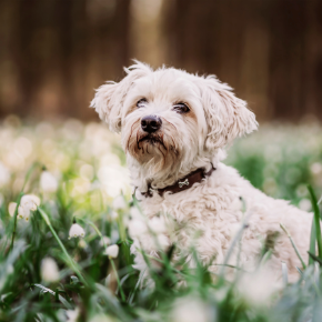 Dog worming advice for Spring