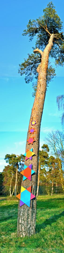 SKY STAR TREE