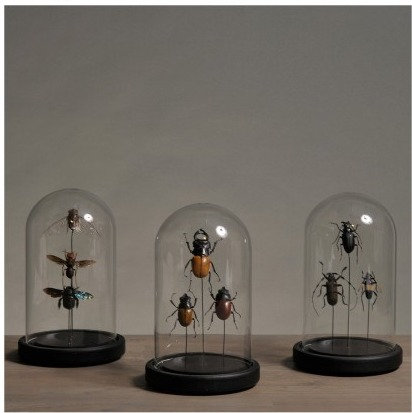 Small Domes With Insects (set Of 3)