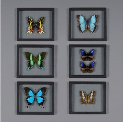 Butterfly Frame Boxes- set of 6