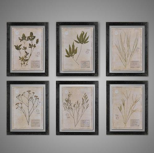 Black Herbarium Frames From France (set of 6)