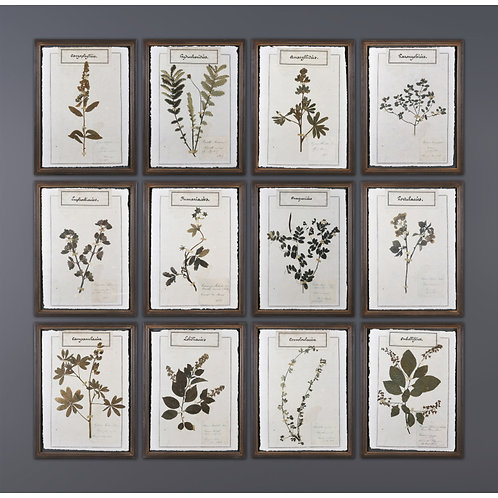 Wall Herb Frames (set of 12)