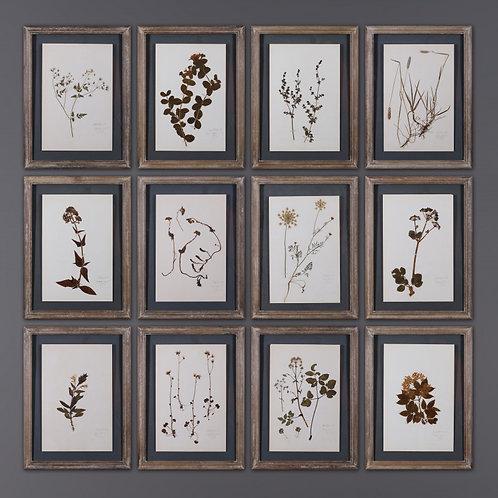 Set of 12 Old Herb Frames
