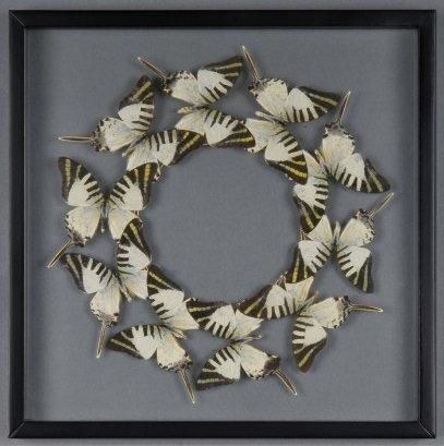 Patysa Butterflies Frame Box N°9