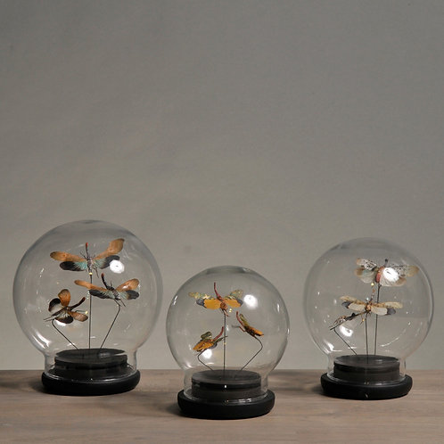 Set of 3 Glass Insect Globes