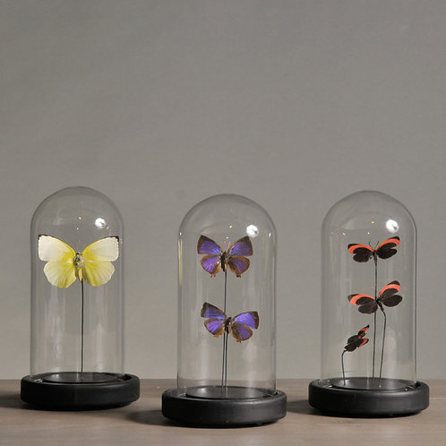 Mini Domes With Butterflies (set of 3)