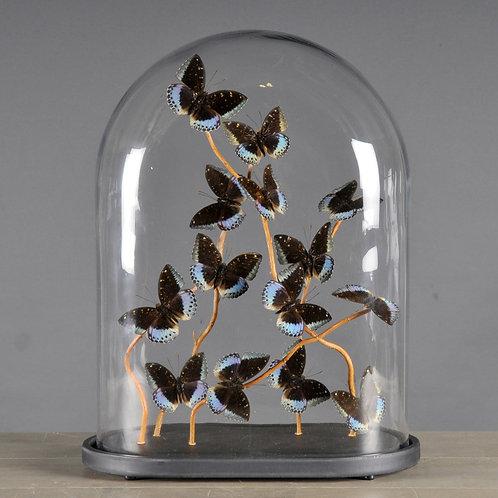 Oval Glass Globe With Butterflies XL
