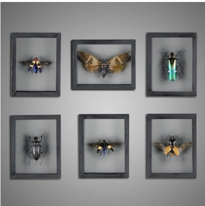 Insect Frame Boxes (set of 6)