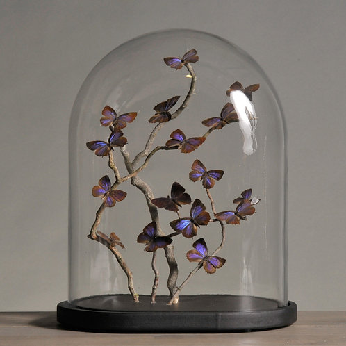 Small Oval Glass Globe With Blue Salix Butterflies
