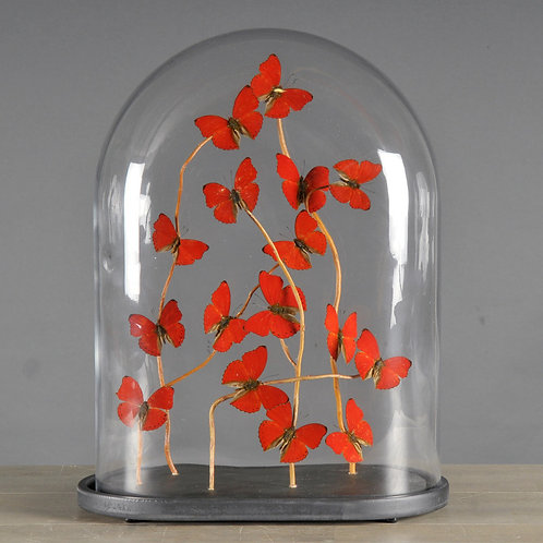 Oval Glass Globe With Red Butterflies