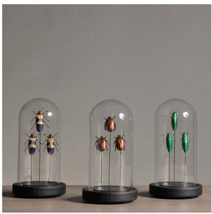 Mini Domes With Insects (set Of 3)