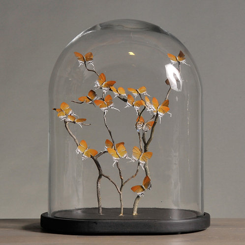 Small Oval Glass Globe With Orange Butterflies