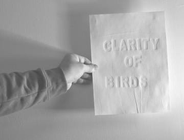 clarity of birds