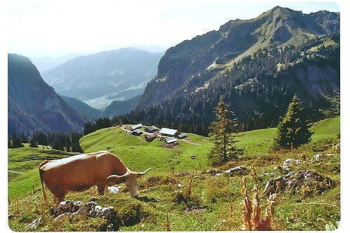 278 Kultur im Berner Oberland, z.B. Alp Morgeten im Simmental