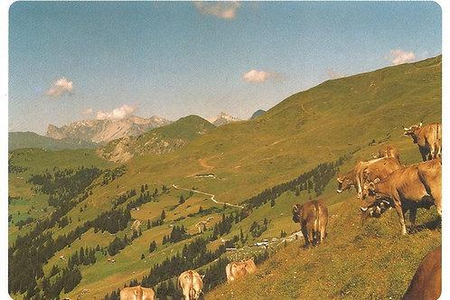 106 Gute Nachbarschaft. Blick von der kleinen Umweide der Saaser Alp Albeina ...