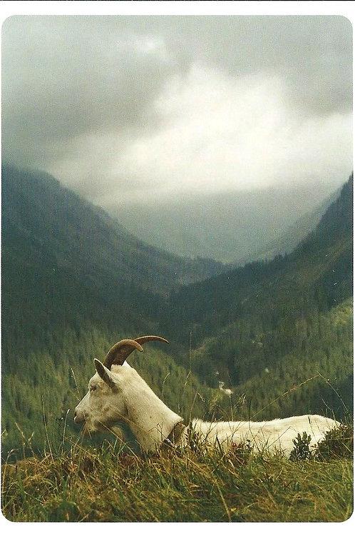 231 Liebe zur Alp