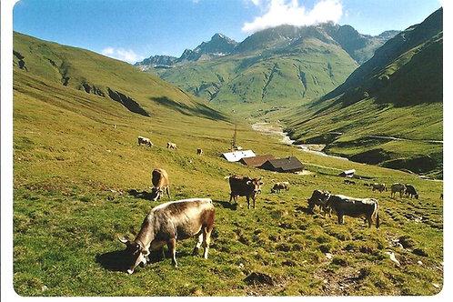 508 Kultur in Graubünden, zum Beispiel Alp Bergalga im Avers