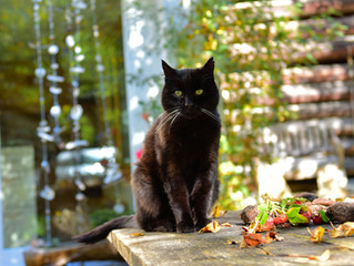 Die Katzlis