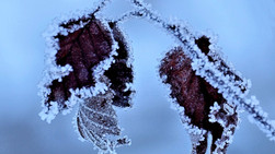 Im Winterzauberland