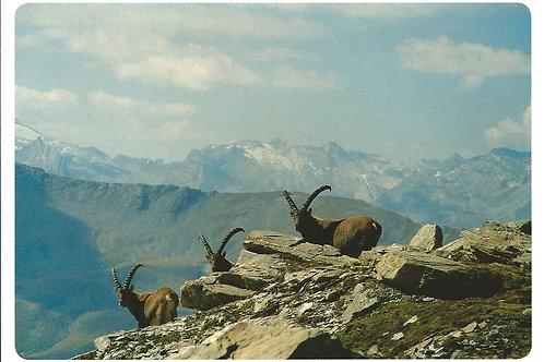 303 Kultur in Graubünden, z.B. Via Capricorn oder die Ausstellung im Center...
