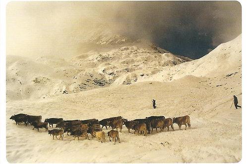 39 Hirten im Schnee