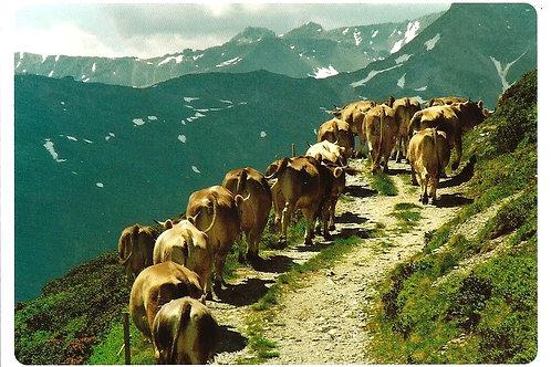 201 Wenn Herden ziehen