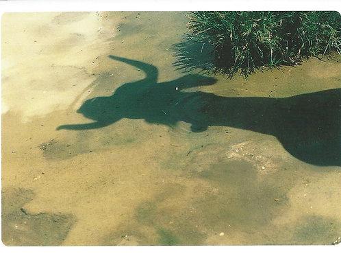 1 Wenn dein Schatten dein Spiegelbild wird