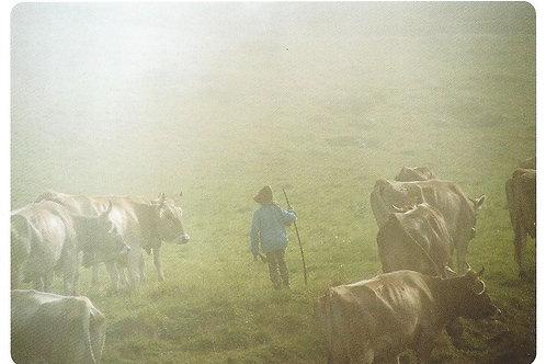 90 Hirten im Nebel