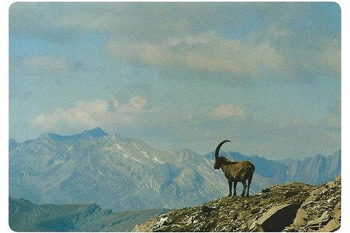 304 Kultur in Graubünden, z.B. Via Capricorn, wo sich Naturraum und Kulturraum..