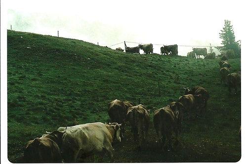 241 Hirten ernähren ihre Herden, die Herden ihre Hirten