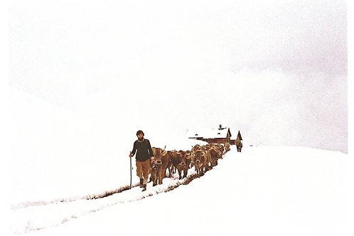 319 Hundert Tage Alp