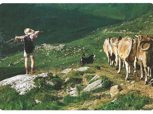 6 Hirten - Hüten - Behüten